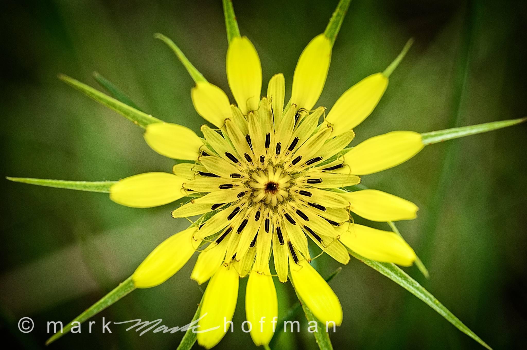 Mark_Hoffman_photophart_DSC_7174_Velvia_PPORT_cap1_var1.jpg