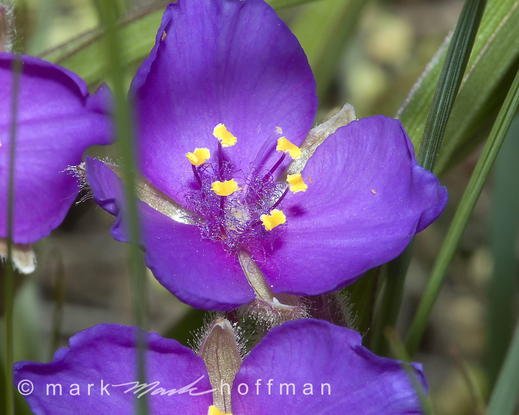 Mark_Hoffman_photophart_DSC_7279_cap1_var1.jpg
