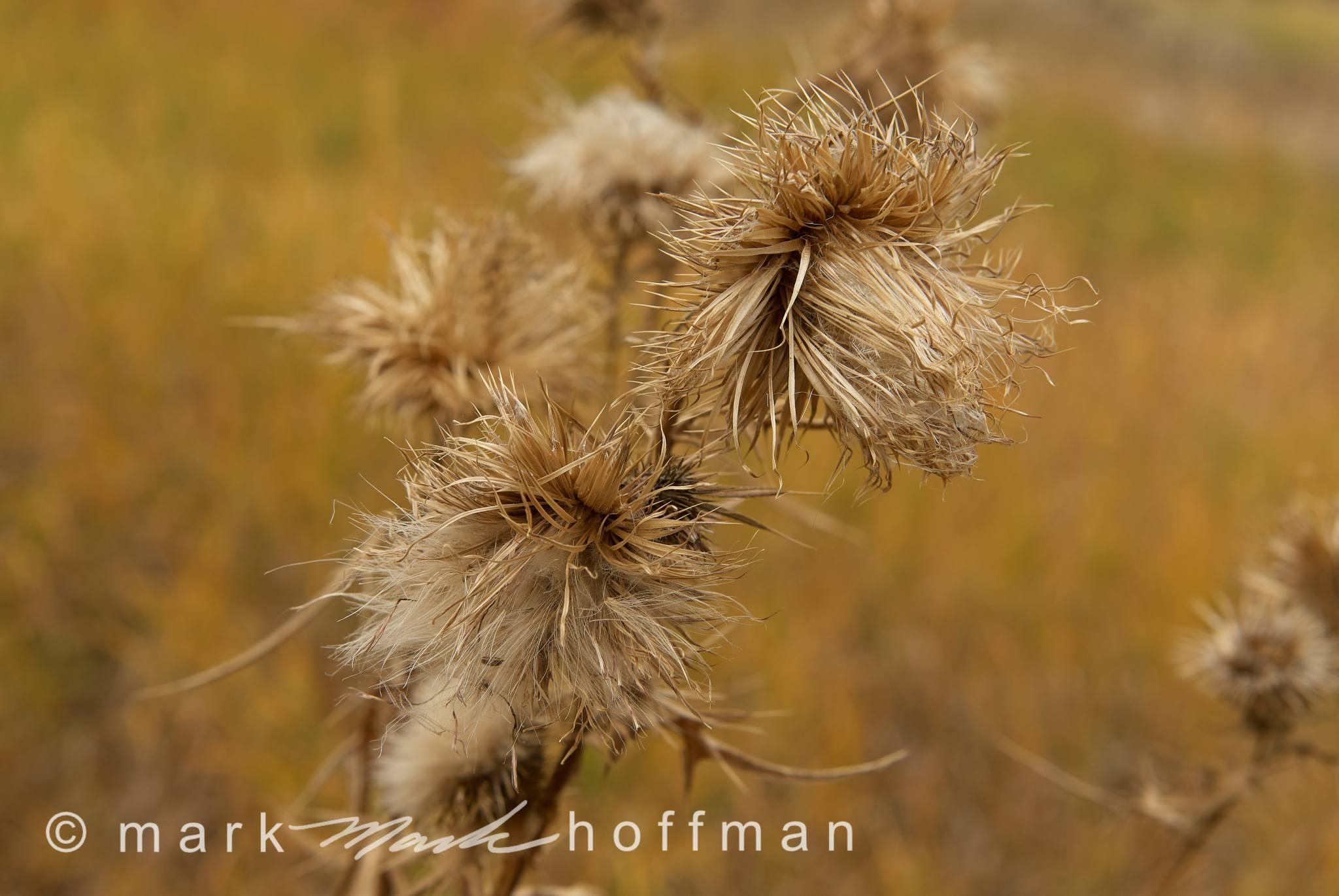 Mark_Hoffman_photophart_ND22185_cap1_var1.jpg